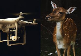 Drohnen für den Rehkitzschutz  in NRW mit 200.000 Euro gefördert